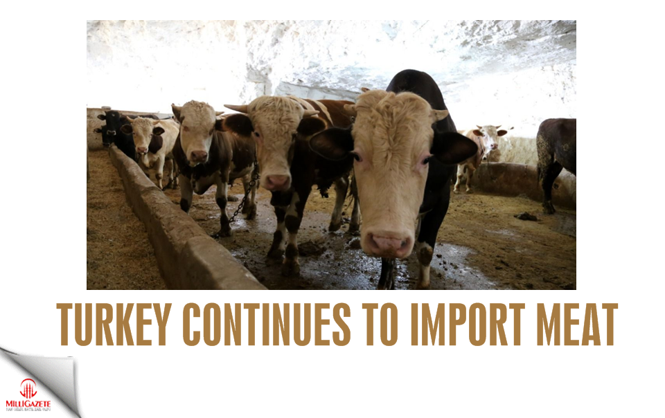Turkey continues to import meat