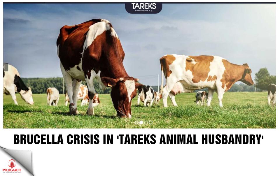 Brucella crisis in Tareks Animal Husbandry