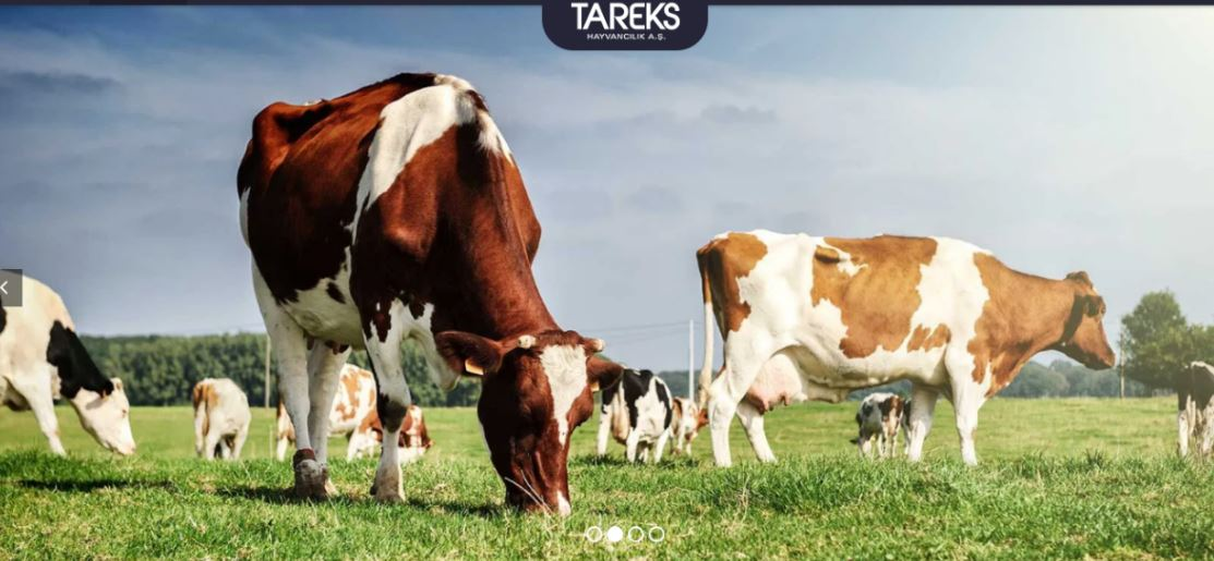 Brucella crisis in Tareks Animal Husbandry