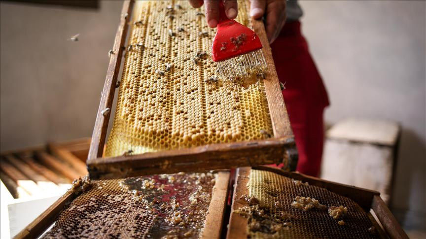 European bank to loan Turkish honey producer