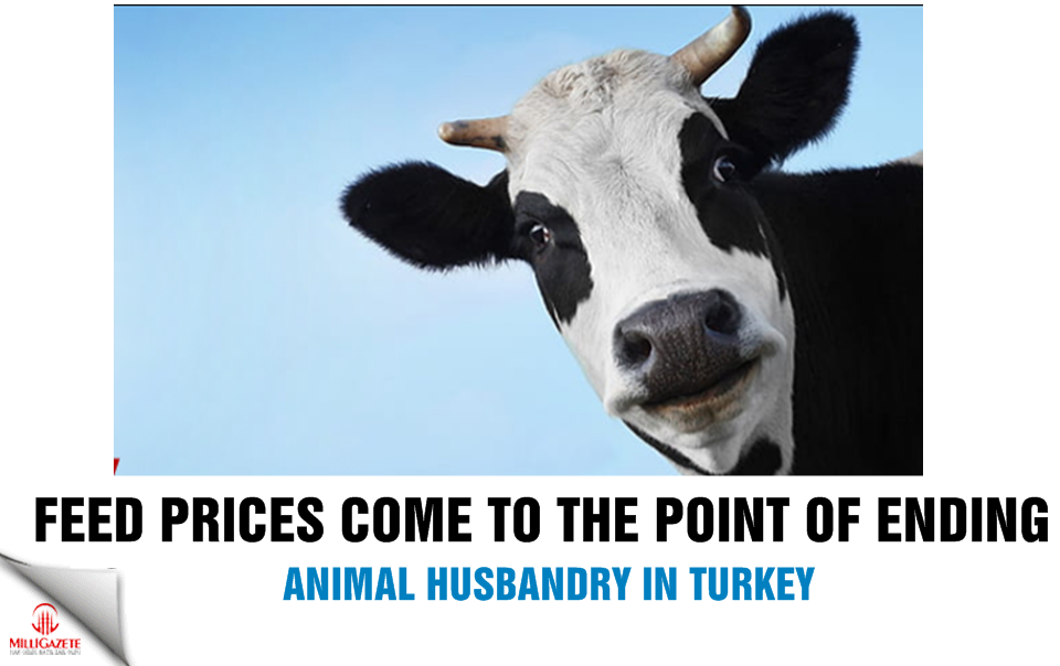 Feed prices come to the point of ending animal husbandry in Turkey