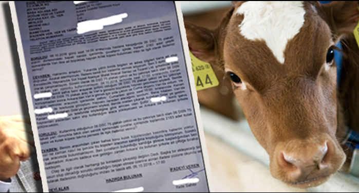 Milli Gazete reaches the report of investigation of an operation on animal husbandry
