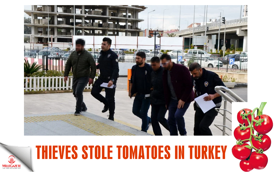 Thieves stole tomatoes in Turkey