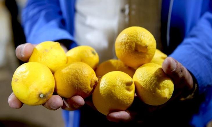 Turkey lifts restriction on export of lemons