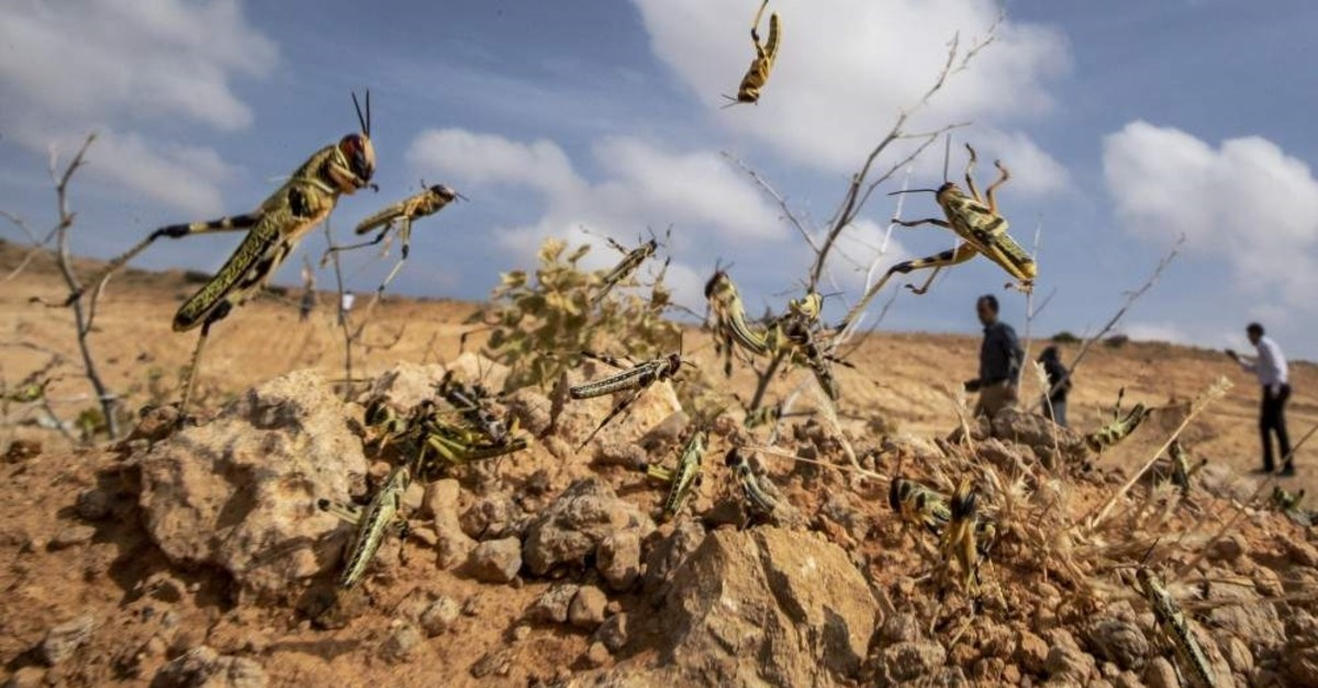 Turkey may face desert locust outbreak, chamber head warns