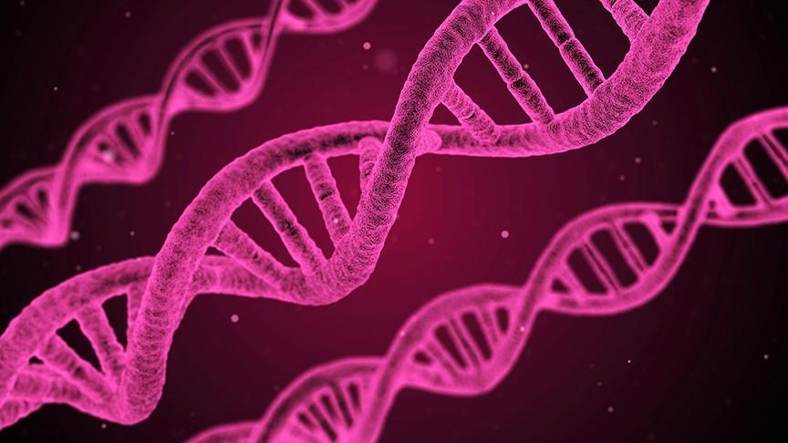 Turkish gene discovery hailed as top scientific find