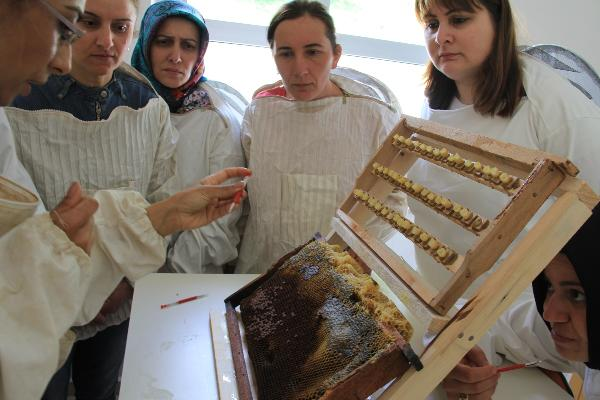 Woman beekeepers are to produce royal jelly
